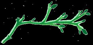 branche divider 1